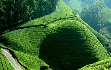 Romantic Kerala ( 6N 7D)