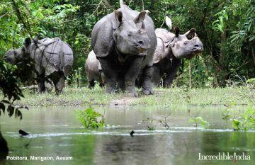 Assam Meghalaya 06 Days