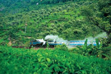 GO green with OOTY