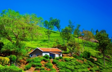 Mesmerizing Ooty Coimbatore Tour Package