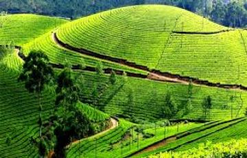 TPJ-37 Romantic Kerala Tour