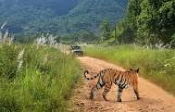 Madhya Pradesh  Bandhavgarh National Park Safari 02 Nights &