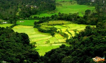 Mysore- coorg- ooty  5 nights 6 day