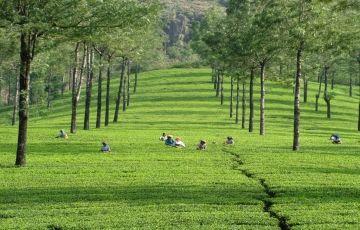 Kerala With Madurai & Rameshwaram