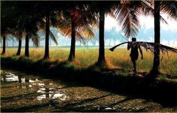 Kerala Magic in the Monsoon