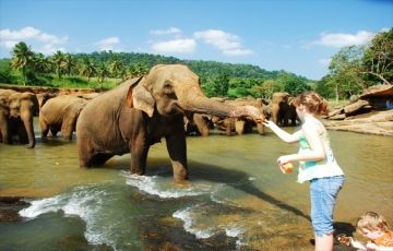 Ceylon Heritage Tour- 2 Nights 3 Days