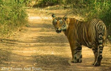 Amazing Tour Corbett with Uttarakhand 05N/06D