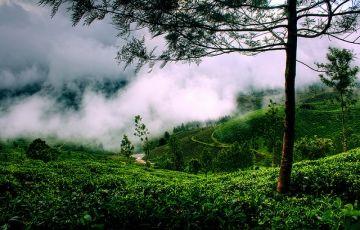 Beautiful Kerala Tour 5Nights/6Days