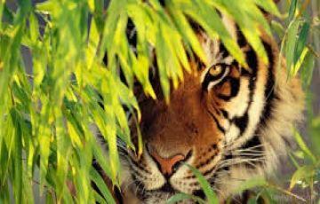 Wonderful Kerala Tour 7Days/6Nights