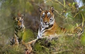 South India Wildlife Tour 14Days/13Nights