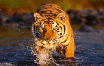 Golden Triangle with Wildlife Tour 13Days/12Nights