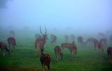 South India Wildlife Tour 15 Days / 14 Nights