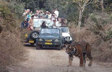Golden Triangle with Tiger Tour (08 Days / 07 Nights)