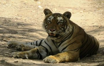 Ranthambore Delight 01Nights / 02 Days