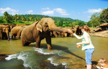 Sri Lankan Honeymoon Dreams