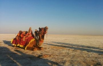 Harappan Ruins and Colours of Rann: Kutch