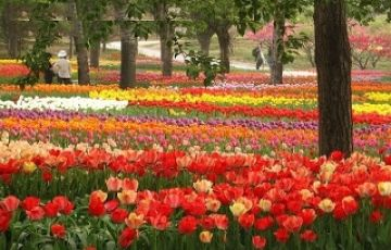 Ooty & Bangalore Tour Package
