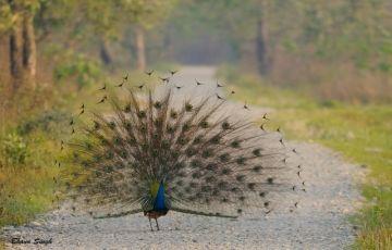 Wildlife Tour at Manash National Park