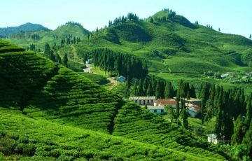 Visit To Darjeeling And Pelling