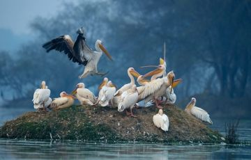 Weekend Trip to Bharatpur Tour