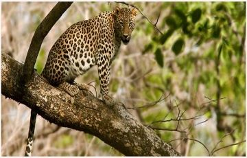 Kanha National Park Tour Package
