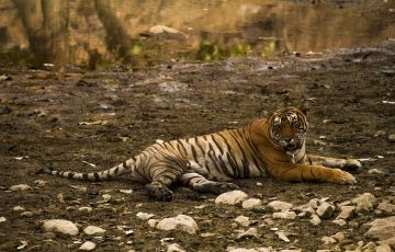 Wildlife tour of Madhya Bharat Tour
