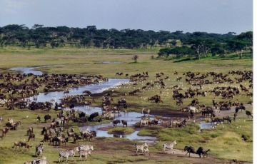 Best of Tanzania Bush Safari