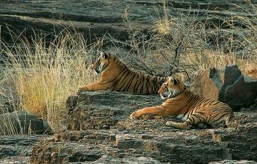 Kerala Wildlife Package