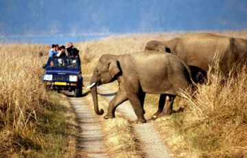 Wildlife Rajasthan Tour
