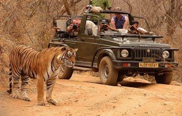 The Royal Safari