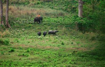 Wildlife Tour Dooars