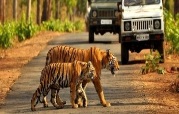 Amazing Uttaranchal 4N/5D Package