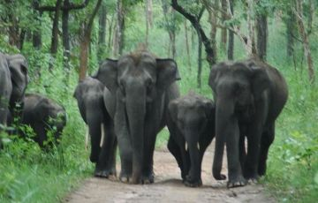 Green Wayanad Tour 1Night/2 Days