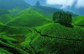 Kerala Group Tour 6Nights/7Days