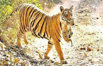 Best Of Jaipur & Ranthambore