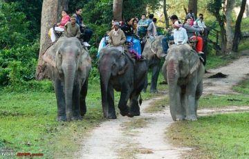 Wildlife of East India Tour