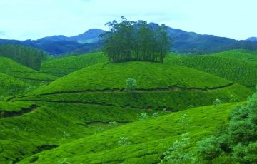 Family Tour In Munnar And Kumarakom Houseboat