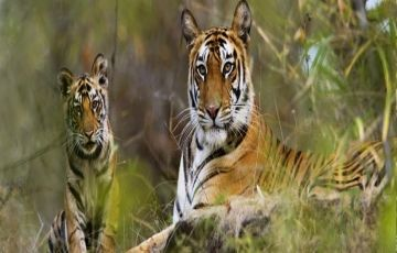 Sunderban Jungle Tour - Royal Bengal Tiger View Point