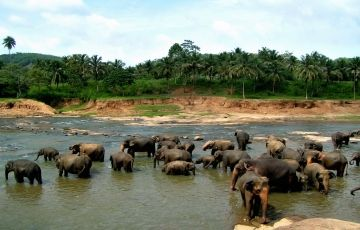 Amazing Srilanka Trip 3 Days & 2 Nights
