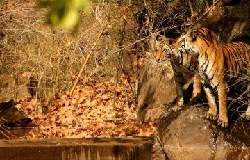 Central India Tiger Tour