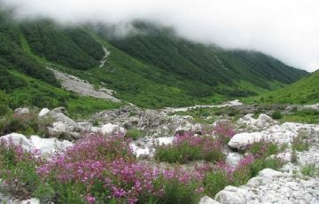 Monsoon Special - Valley Of Flowers