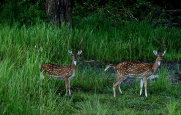 Nagarhole National Park Weekend Getaway Tour