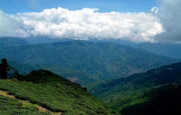 North East Delight with Pelling