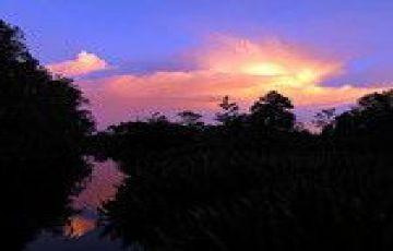Orangutans Tour in Tanjung Puting National Park Borneo