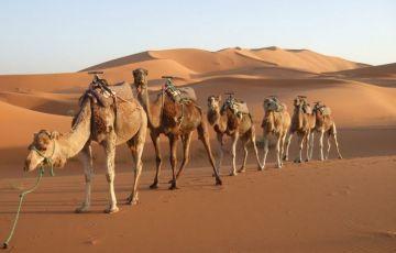 Rajasthan Romance Of Desert Tour