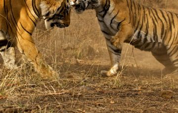 Ranthambhore Wild Life With Golden Triangle Tour