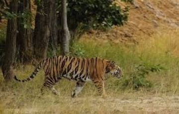 Southern India Wildlife Tour