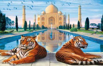 Taj - Tigers and Goa Tour