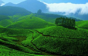 Tea Gardens and Backwaters Tour