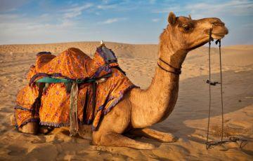 The Golden Rajasthan Tour